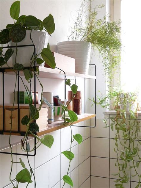 Plants In Bathroom Images by How To Add Plants To Your Home Apartment Apothecary