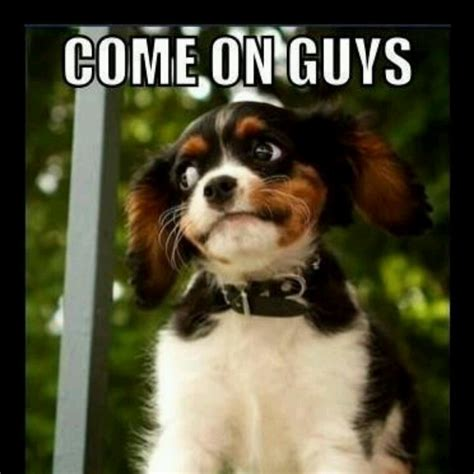 Pet Insurance Meme - 185 best images about pet memes on pinterest