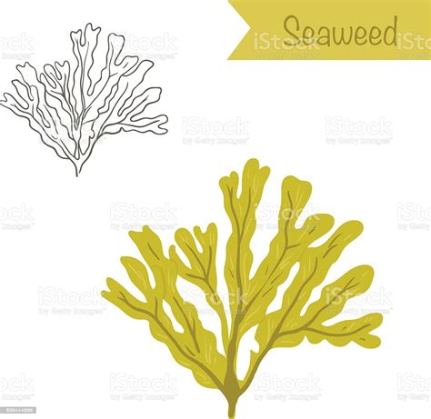 Discover our different themes of free mandala to print and color, for children and adults. Hand Drawn Outlined And Colored Vector Seaweed Stock ...