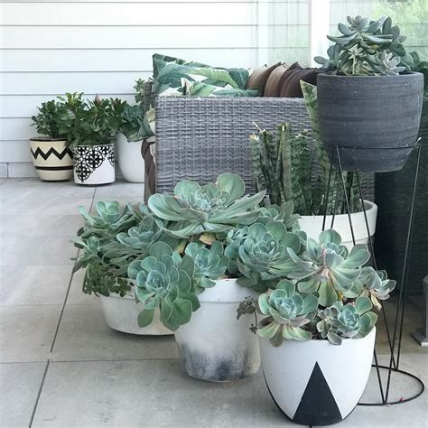 how often should i water succulents how to water succulents