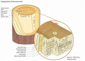 Properties Of Softwood