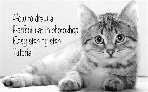 How To Draw A Realistic Cat Easy Photoshop Tutorial Youtube