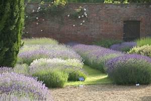 Lavendel Pflanzen Balkon : kent geburtsort und wiege des lavendels pflanzen ~ Lizthompson.info Haus und Dekorationen