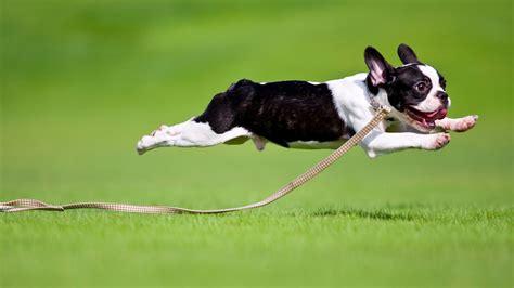 dog  start running   crazy