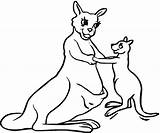 Kangaroo Coloring Pages Outline Clipart Printable Mother Kangaroos Animal Drawing Clip Super Books Kangoroo Boxing Funny Results sketch template
