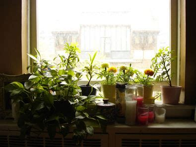Plants For Window Sills saffron and silk window sill magic