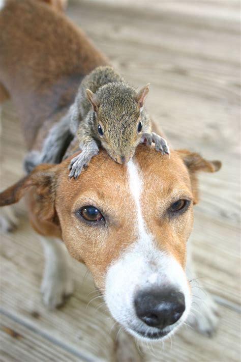 cutest examples  animals riding  animals