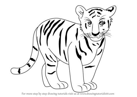 learn   draw tiger cub zoo animals step  step