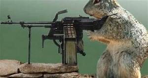 All Wallpapers: Funny Animals With Guns Shooting