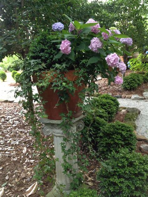 will hydrangeas grow in pots growing hydrangeas in pots container garden ideas hgtv
