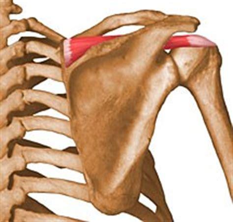 Supraspinatus - UW Radiology
