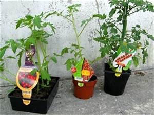 Plant Tomate Cerise : tomates bien acheter ~ Melissatoandfro.com Idées de Décoration