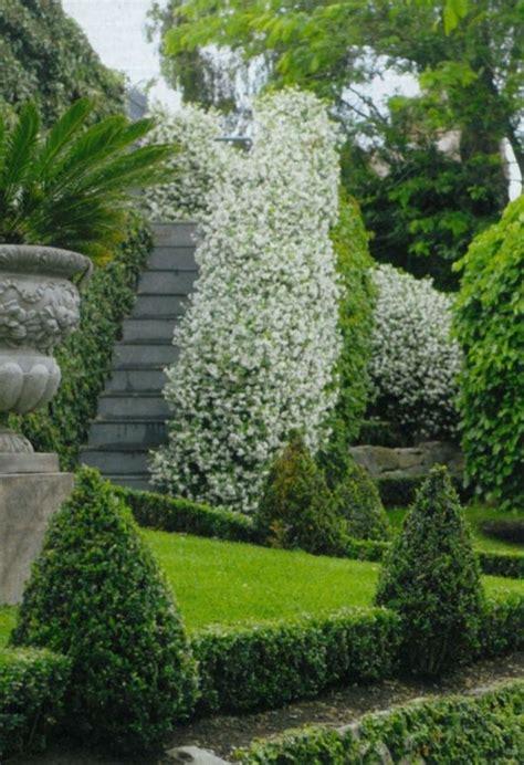 immergrüne bepflanzungen am gartenzaun 100 gartengestaltung bilder und inspiriеrende ideen f 252 r