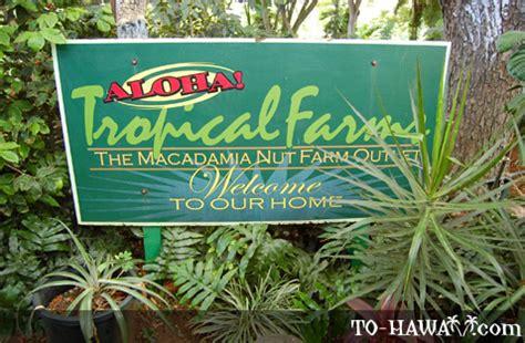 Tropical Farms Macadamia Nut Farm on Oahu, Hawaii