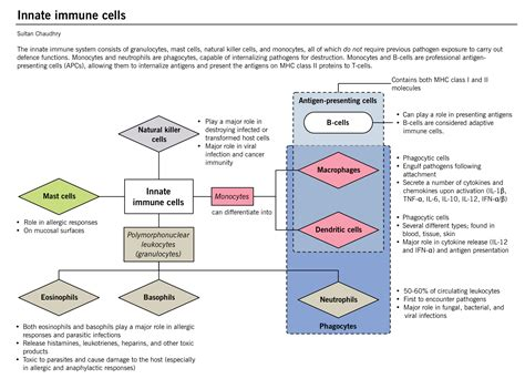 Introduction To Immunology Mcmaster Pathophysiology Review