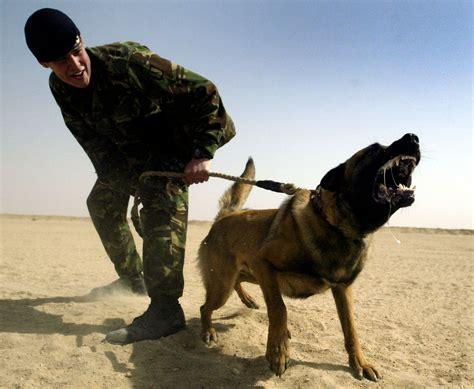 hero german shepherd saves entire sas crew  isis ambush