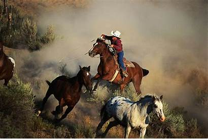 Horses Wild Wallpapers Horse Cowboys Western Running