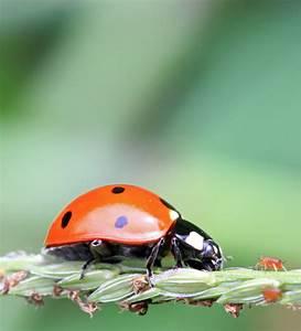 Schädlinge Im Garten : natuerliche tierische hilfe im garten nuetzlinge gegen ~ Lizthompson.info Haus und Dekorationen