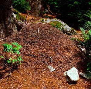 Hausmittel Gegen Ameisen Im Garten : was hilft gegen ameisen ameisen bek mpfen was hilft gegen ~ Whattoseeinmadrid.com Haus und Dekorationen