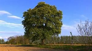 Bäume Für Kübel : b ume f r den garten ~ Michelbontemps.com Haus und Dekorationen