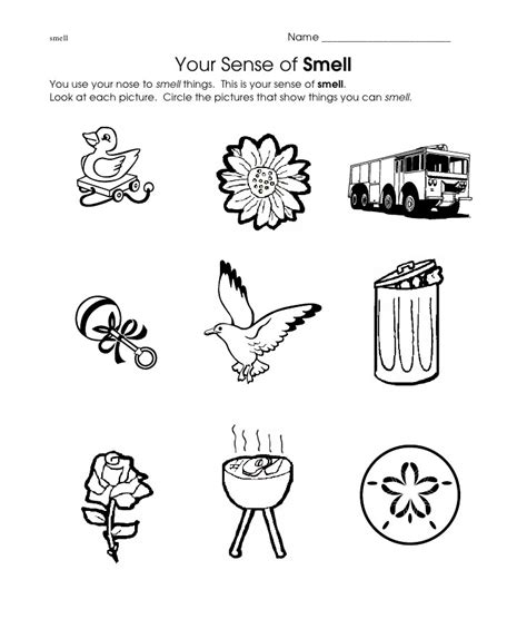 crafts actvities and worksheets for preschool toddler and 126 | smell worksheet