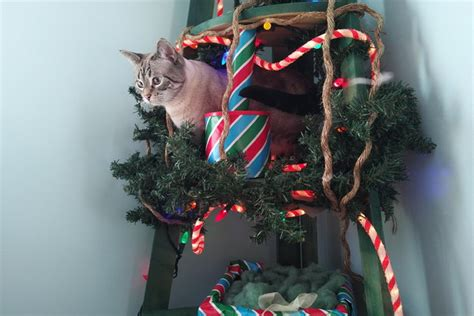 how to make a cat friendly alternative to a christmas tree