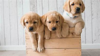 Puppies Wallpapers Animals