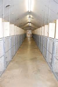 Indoor Dog Kennel Boarding