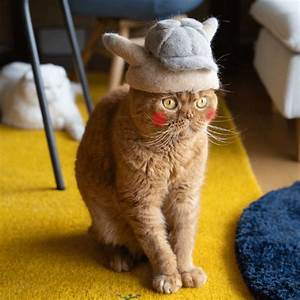 Ryo Yamazaki Captures Cats In Hats Crafted Using Their Own Fur