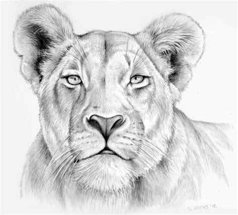 lioness  pencil  gregchapindeviantartcom
