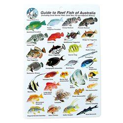 water proof fish species guide  reef fish