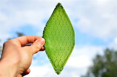 ls made from leaves the silk leaf a man made photosynthesizing leaf tech take
