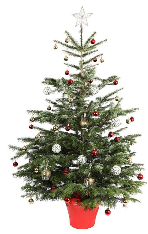 You Cut Christmas Trees