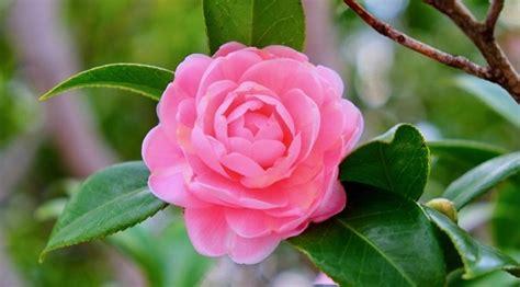 15+ Jenis Jenis Bunga Beserta Penjelasannya + Gambar LENGKAP