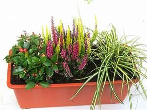 Winterharte Pflanzen Für Balkonkästen : kleines buntes balkonpflanzen set f r balkonkasten 40 cm lang pflanzen versand f r die besten ~ Orissabook.com Haus und Dekorationen