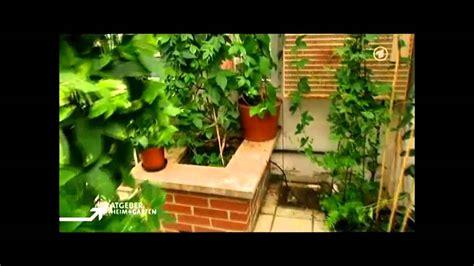 Die Passionsblume (ardratgeber Heim & Garten) Youtube