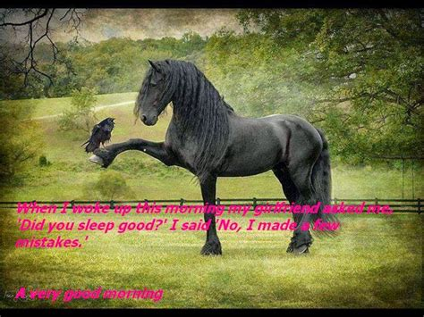 morning horse very wishes wishgoodmorning horses friesian nice freisian fresian friends href embed src code gorgeous friend lady