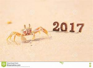 Wood Number 2017 On Beach Background With Ghost Crab Idea ...
