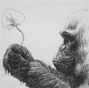 Manuel Tadena  Animal Drawings