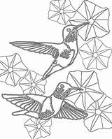 Morning Coloring Glory Pages Humming Birds Hummingbirds Glories Hummingbird Scarlet Sheets Ruby Door Macaw Getdrawings Template sketch template