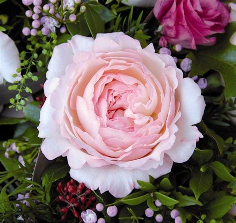 david austin wedding flowers pinterest
