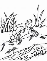 Coloring Pages Turtle Box Grass Reference Printable Animals Getdrawings Samanthasbell sketch template