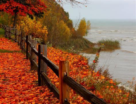 nature landscape forest beach sea tree autumn trees