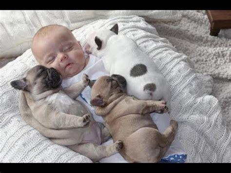 cute dogs babysitting dog  baby sleeping