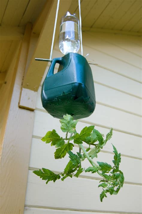 diy hanging tomato planter  design