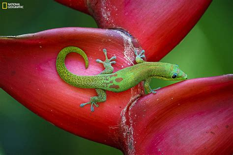 National Geographic Photo Contest 2014: Beautiful ...