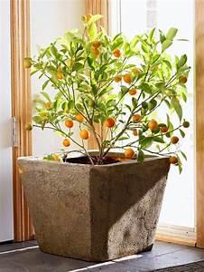 Marc De Café Plantes D Intérieur : savourez la beaut de la plante d int rieur dans notre galerie ~ Melissatoandfro.com Idées de Décoration