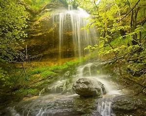 Forest, Rocks, Trees, Waterfall, Nature, Wallpapers, Hd