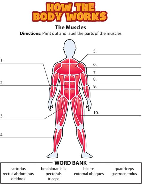 The human muscular system is complex and has many functions in the body. Blank Body Drawing at GetDrawings | Free download