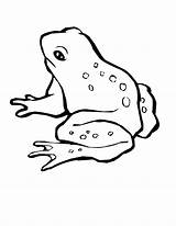 Frog Coloring Pages Printable Tree Sheets Animal Drawing Animals Hop Piggy Miss Frogs Magnificent Pets Getdrawings Drawings Draw Parts Spring sketch template